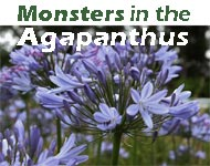 Monsters in the Agapanthus